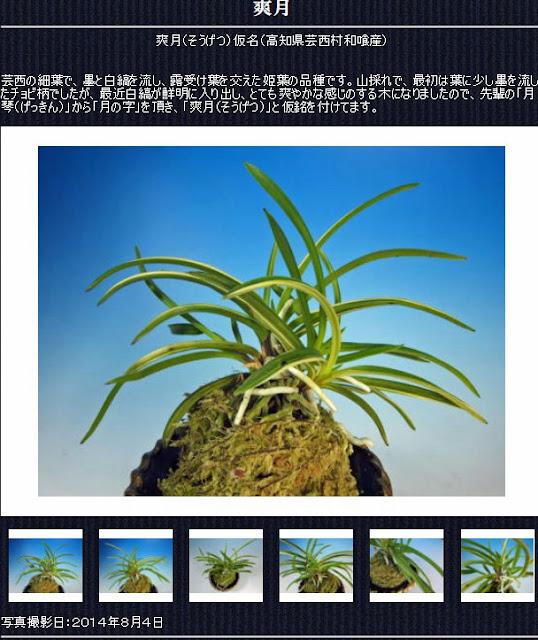 http://www.fuuran.jp/jiman_sougetu.html#%E7%88%BD%E6%9C%88%E3%81%AE%E8%A9%B3%E7%B4%B0