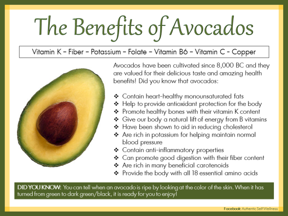 Is It Good For Dogs To Eat Avocado