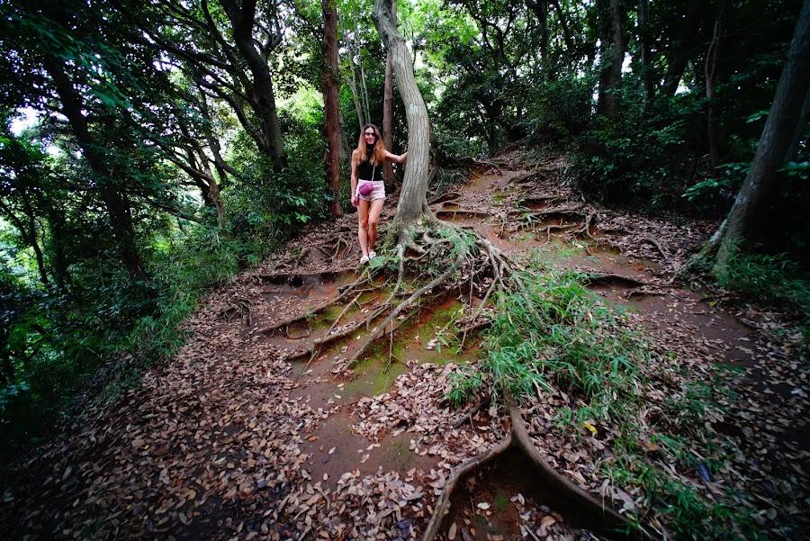 Kamakura hiking trail