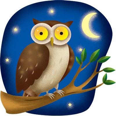 Night Owl Racing Forum