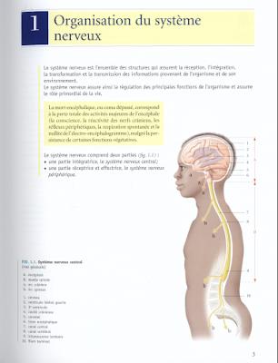 Télécharger Livre Gratuit Organisation du système nerveux pdf