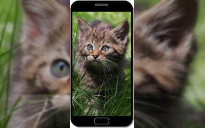 Petit Chaton dans l'Herbe - Fond d'Écran en QHD pour Mobile