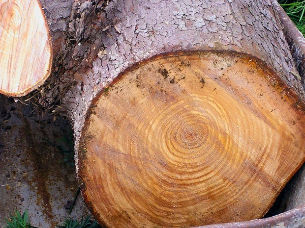 Dendrochronology add tree rings does not work