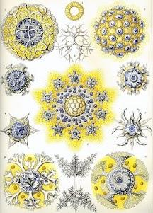 Ernst Haeckel - Γερμανός βιολόγος και καλλιτέχνης 1