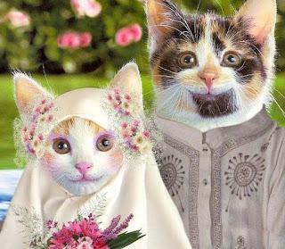 Cute Muslim Baby Wallpapers Foto Kucing Yang Lucu Dan Cantik