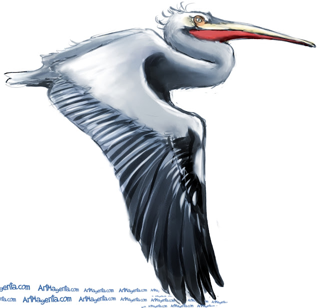 Dalmatian Pelican sketch painting. Bird art drawing by illustrator Artmagenta.