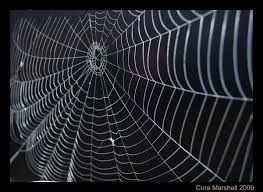 Spiders web spin D20