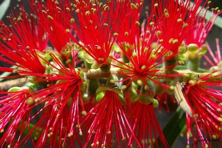 Atrativo para os beija-flores