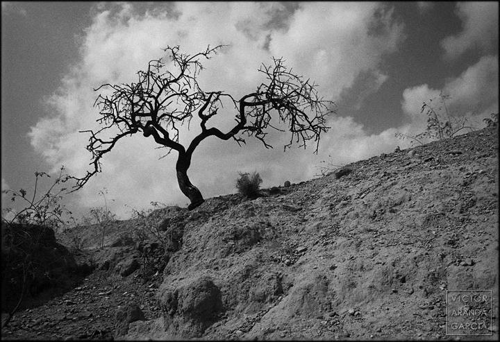 fotografia, naturaleza, paisaje, murcia, fuente_alamo, arbol, nubes,