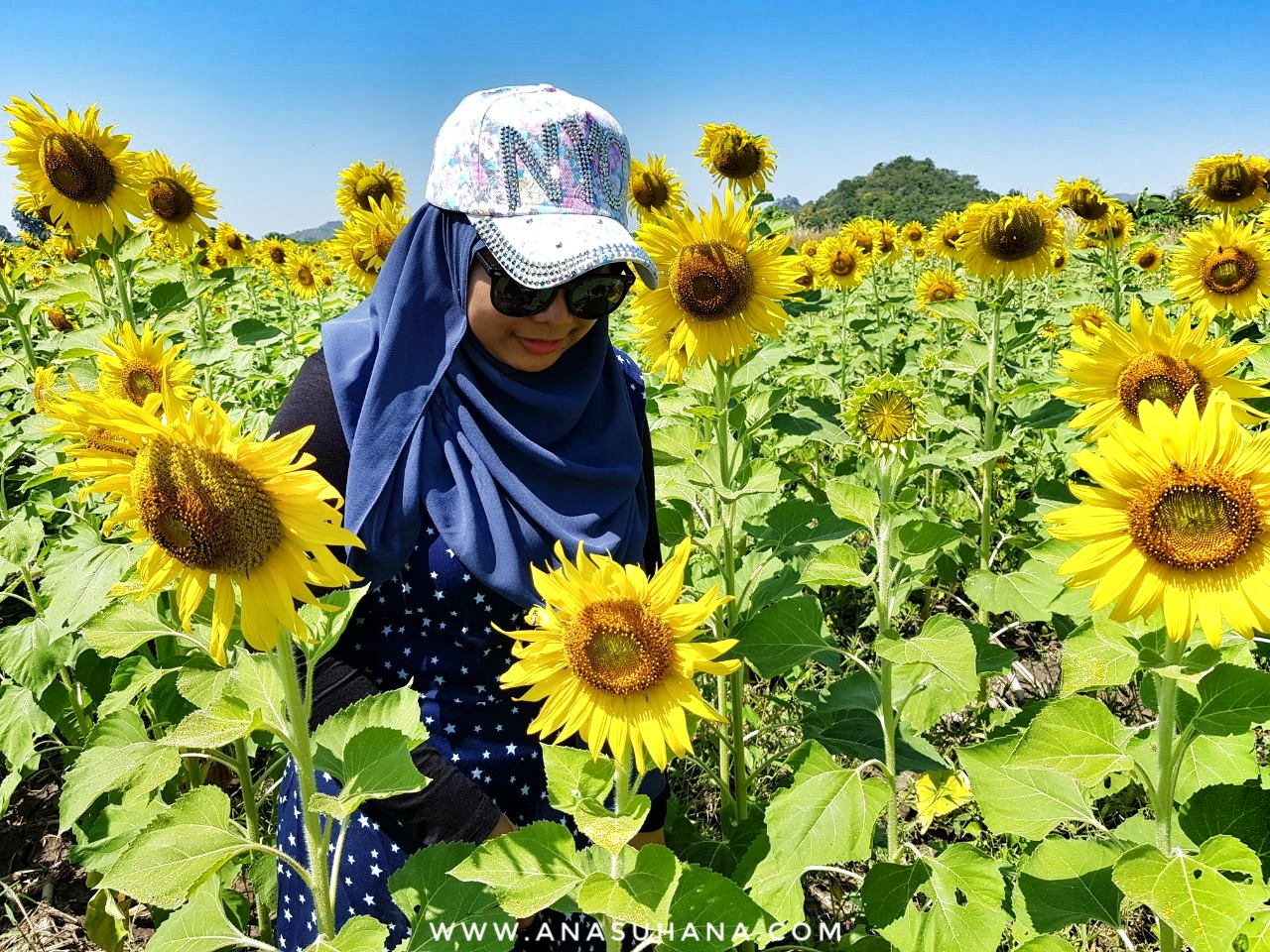 Sunflower Field Lopburi