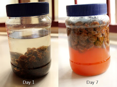 Raisin yeast water