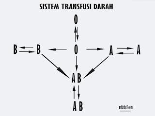 Sistem Sirkulasi Darah Pada Manusia, Sistem transfusi darah manusia