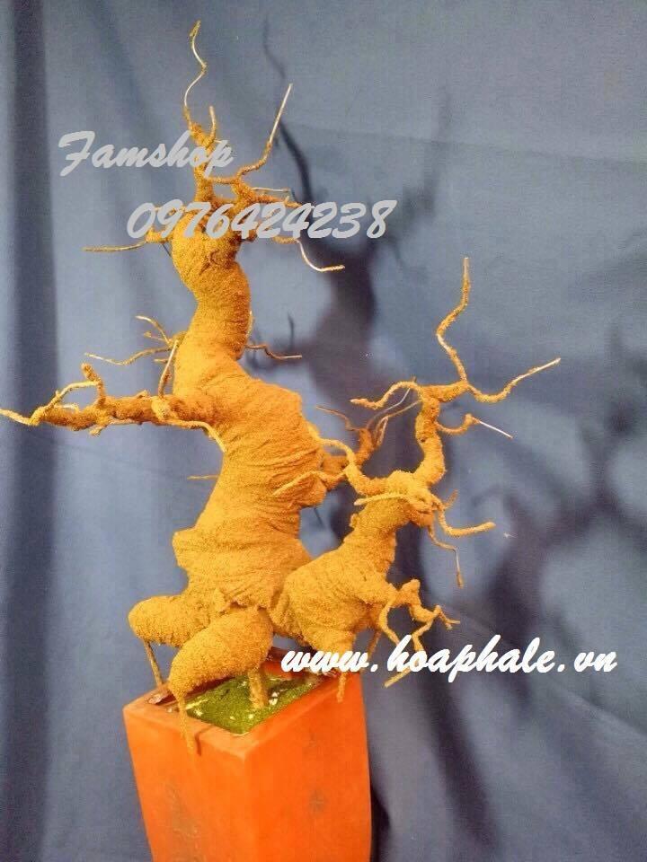 Goc bonsai mai dao tai Cau Moi