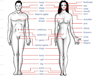 Human body parts name in Hindi and English