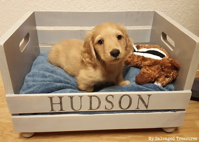 how to turn a new crate into a one-of-a-kind custom dog bed