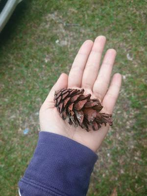 Pengalaman Mendaki Pine Tree Hill dan Twin Peak