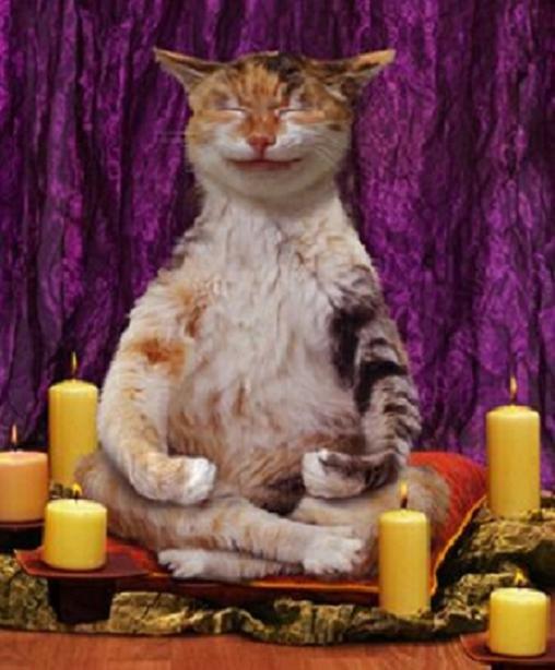 761d0592a Gatos - Significados, Mitos e Verdades
