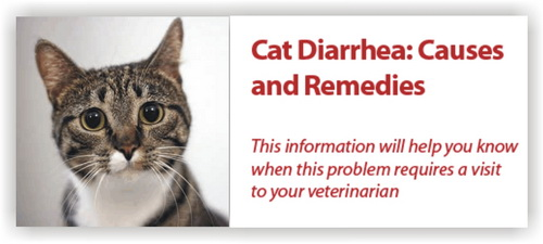 cat diarrhea treatment