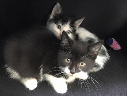 Lovely kittens Bella and Luna