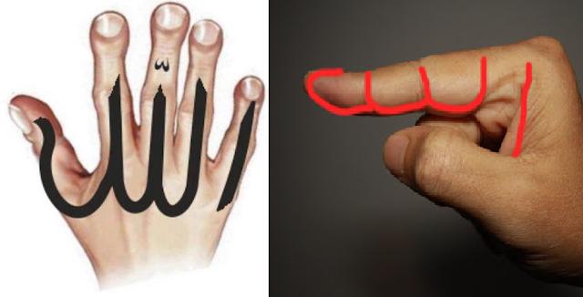 Rahasia di Balik Penciptaan Tangan Manusia, Bagaimana Mungkin Selama Ini Muslim Tak Sadar?