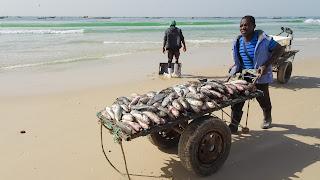 Mauritanian dinner fresh from the beach