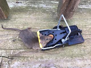 mouse trap walmart