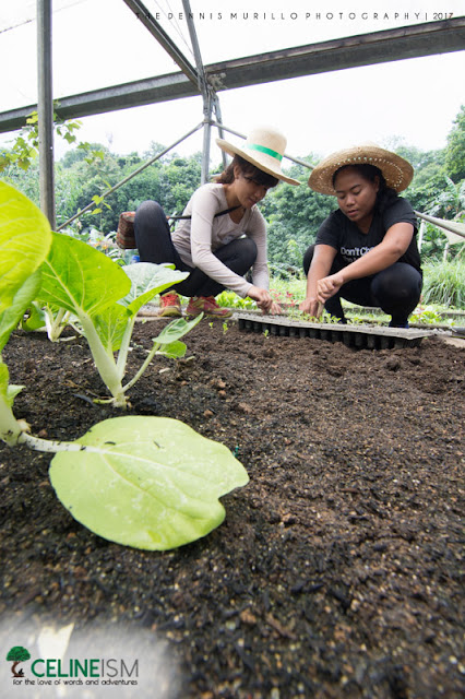 organic vegetable farm in rizal