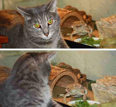Gato y camaleón.
