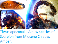 http://sciencythoughts.blogspot.co.uk/2015/08/tityus-apozonalli-new-species-of.html