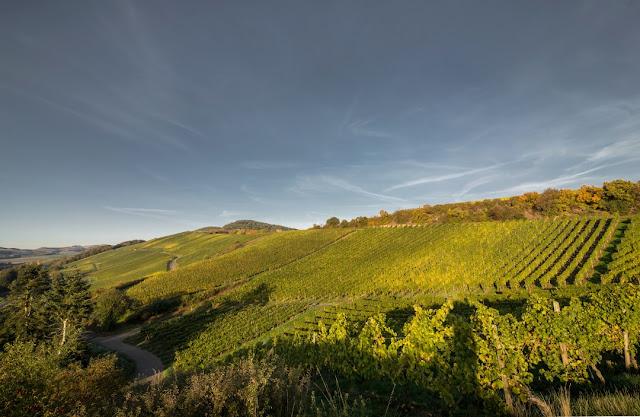 Altenberg: Weinberg vom Wein- und Sektgut Bamberger an der Nahe