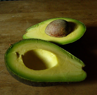 grow an avocado experiment