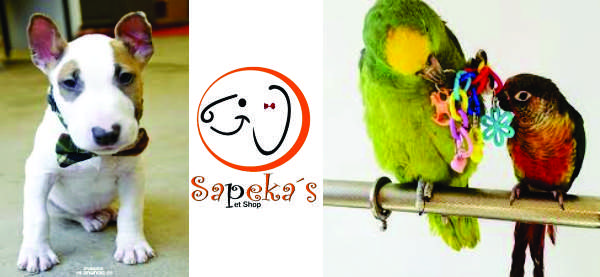 https://www.facebook.com/pg/sapekaspetshop/posts/