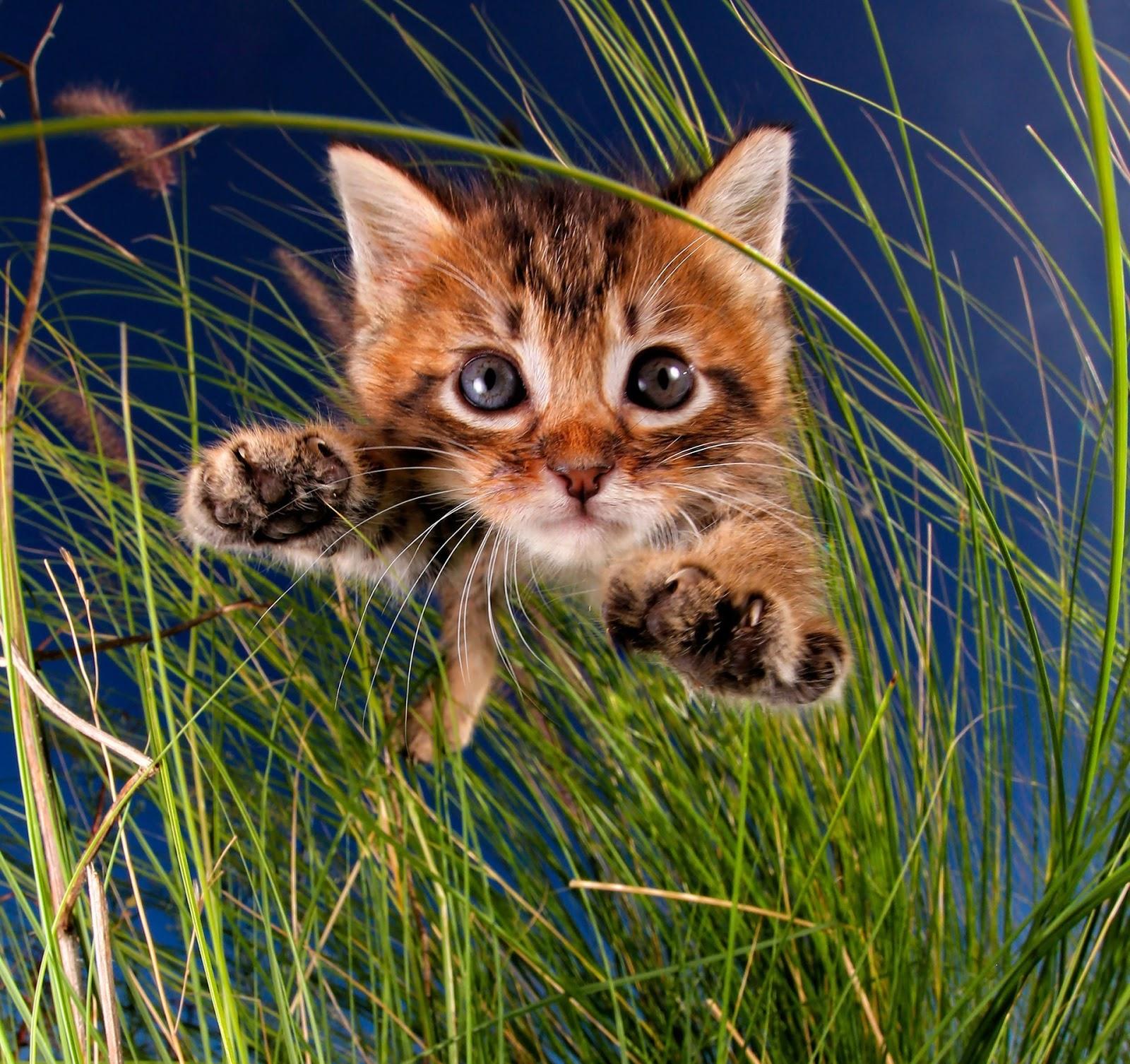 Прикольные картинки кошек милые