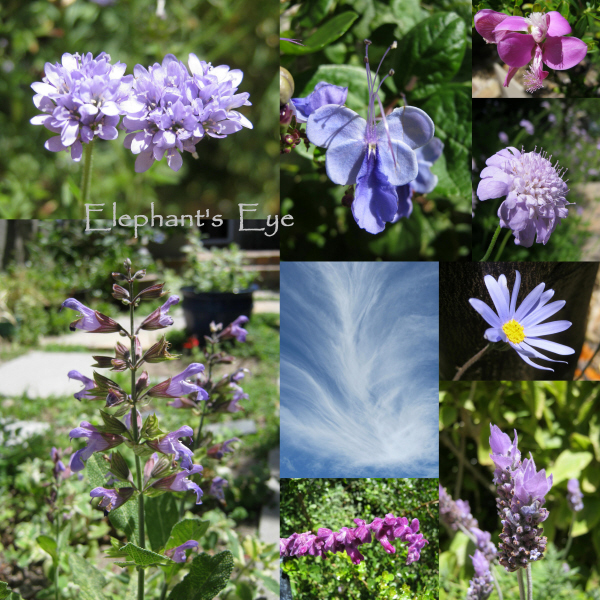 'Blue' flowers in November