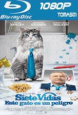 Siete vidas, este gato es un peligro (2016) BRRip 1080p  / BDRip m1080p