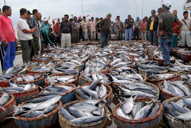 Program GEMARIKAN Dan Potensi Sumberdaya Ikan Indonesia Sebesar 9,9 Juta Ton