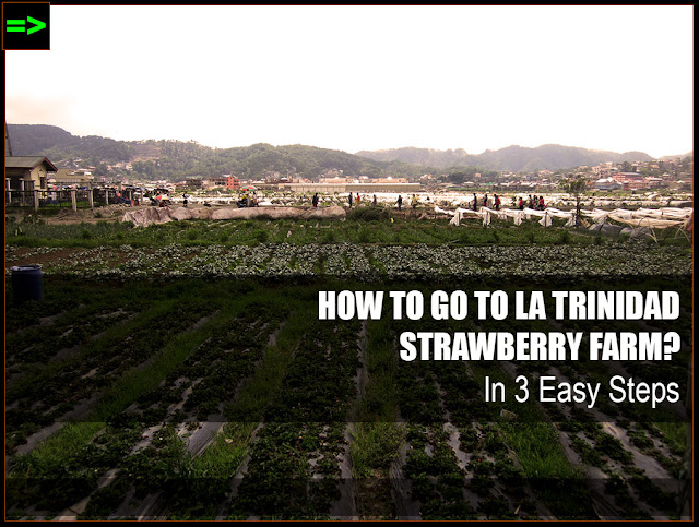 HOW TO GO TO LA TRINIDAD STRAWBERRY FARM, BENGUET
