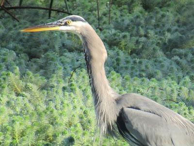 Gray Lodge Wildlife Area auto tour