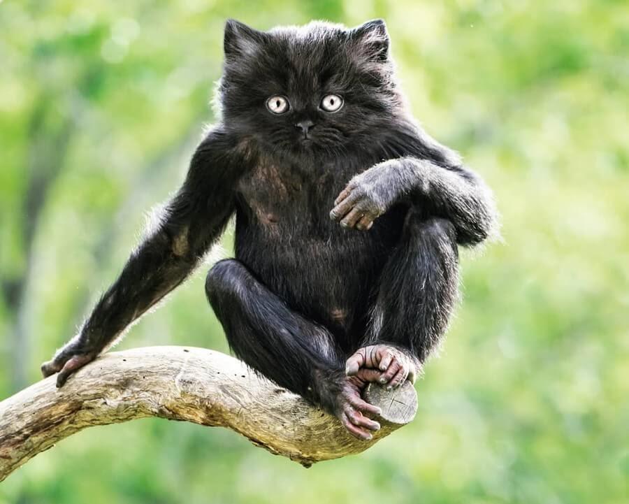01-Monkey-Cat-AOG-Fredriksen-Animal-Art-www-designstack-co