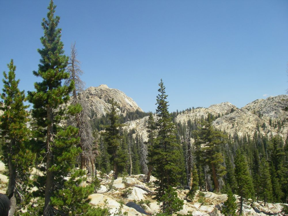Trips, Flies and Fish: Emigrant Wilderness-Huckleberry Lake