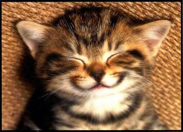 Tiernas Imágenes de Animales Sonriendo 5