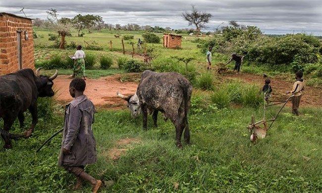 Tại sao nhiều bệnh dịch bắt nguồn từ châu Á và châu Phi