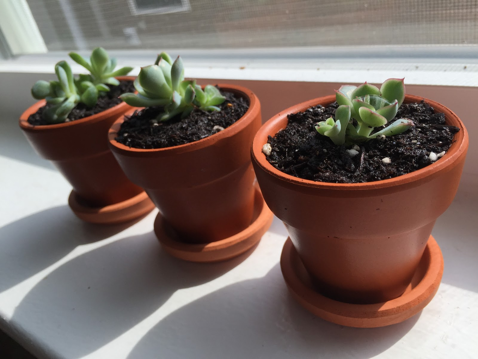 tiny pots for succulents