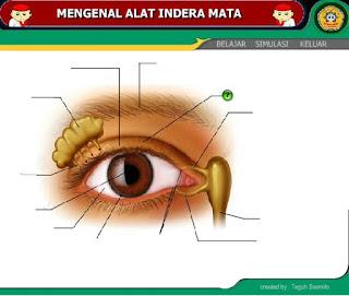 """Mengenal Alat Indera Penglihatan """"Mata"""" (Ilmu Pengetahuan Alam)"""