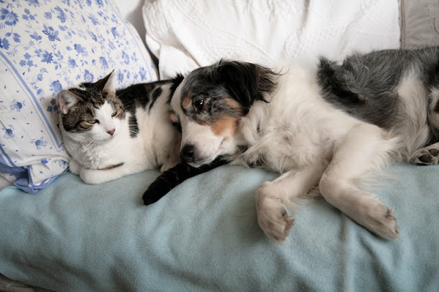 The effects of co-sleeping with a dog, cat or human on women's sleep. Photo shows a dog and cat resting on the bed
