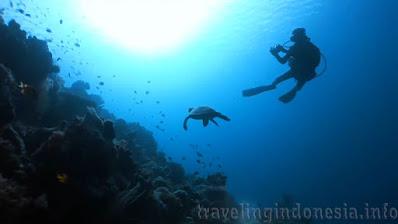 Indonesian marine wildlife diversity