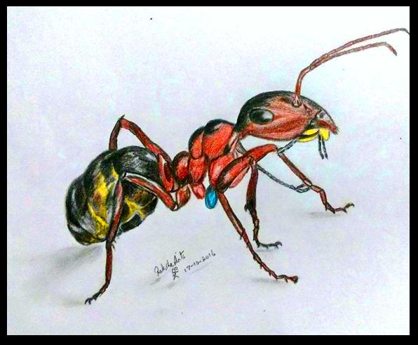 PENCIL DRAWING - ANT