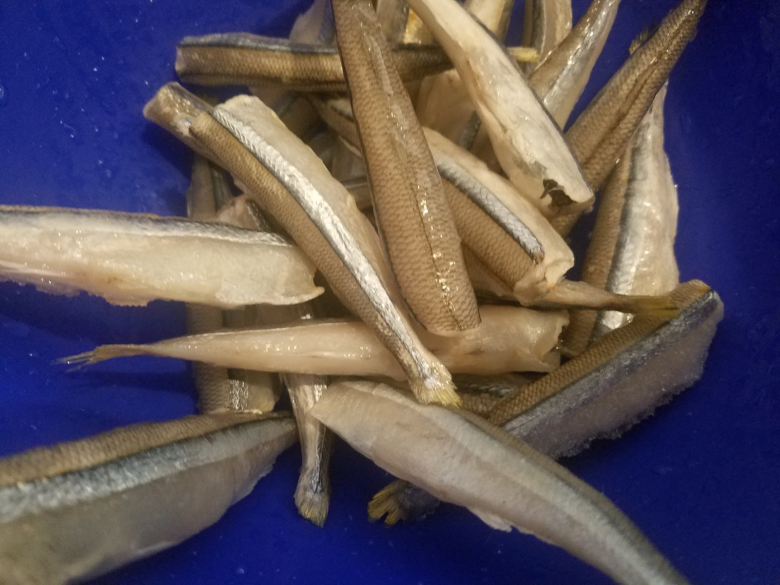 these are smelts cleaned and getting ready to be dipped in seasoned flour and then fried for Christmas Eve Pan Fried Smelts
