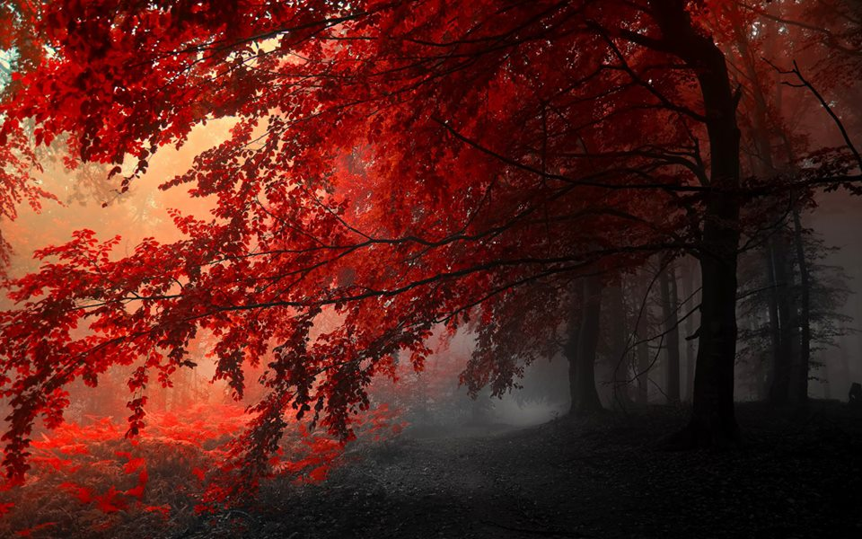 Labels Red Autumn Leaves Photography Hd Wallpapers For: Ο κόσμος της Έφης: ΦΘΙΝΟΠΩΡΙΝΑ ΤΟΠΙΑ