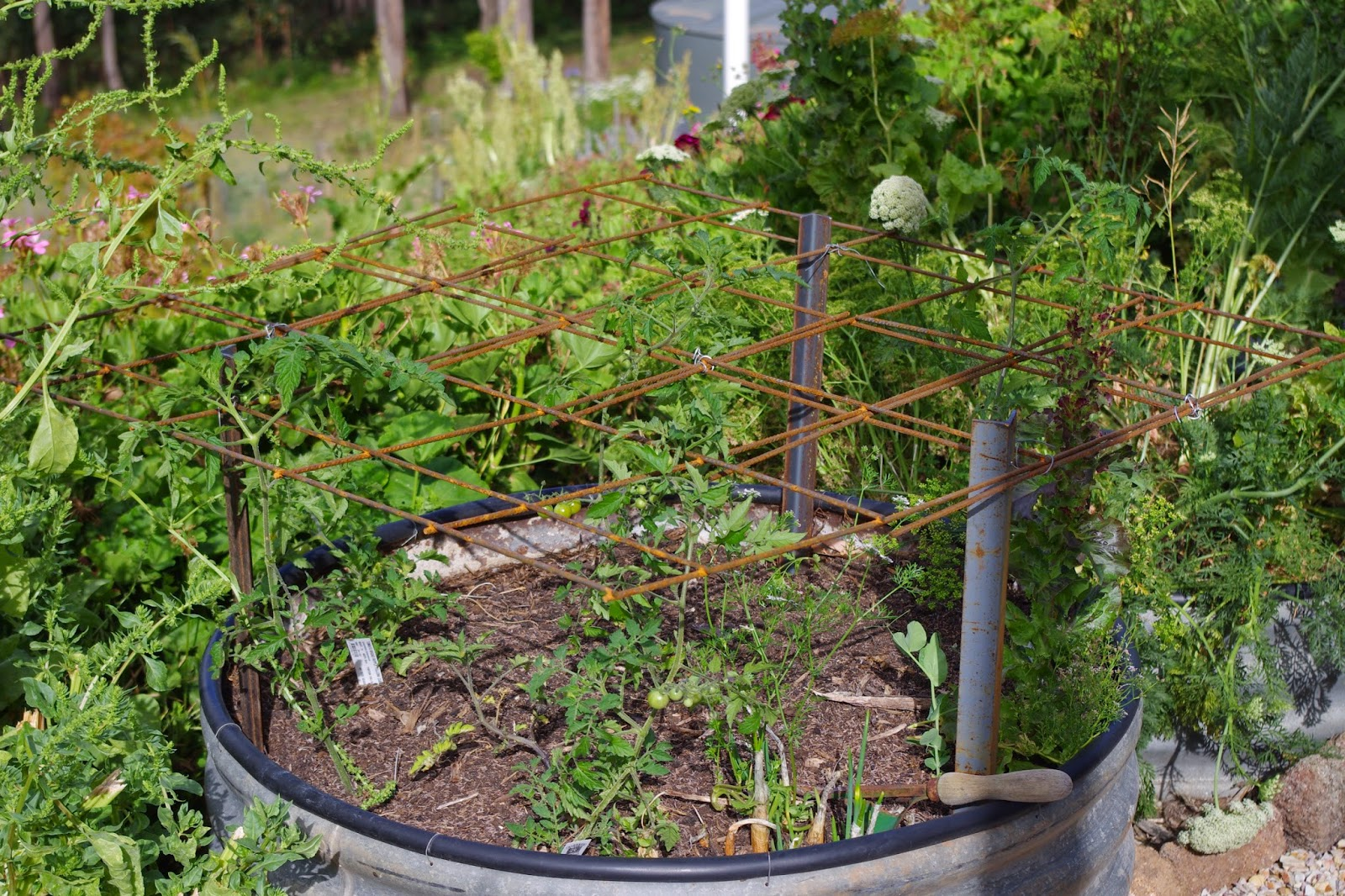 Recycled tomato stakes